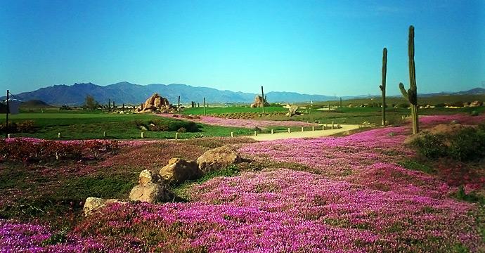 Spain Golf Courses | Desert Springs Resort & GC - Photo 2 Teetimes
