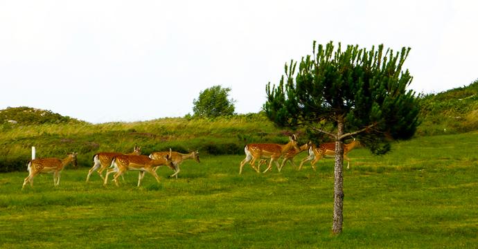 Spain Golf Courses | La Rasa de Berbes   - Photo 5 Teetimes
